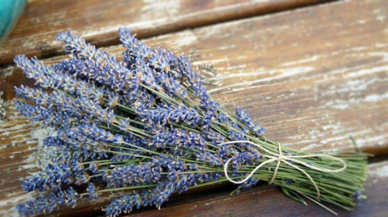 Lavender is a natural alternative to keeping your storage items fresh over the next six months.